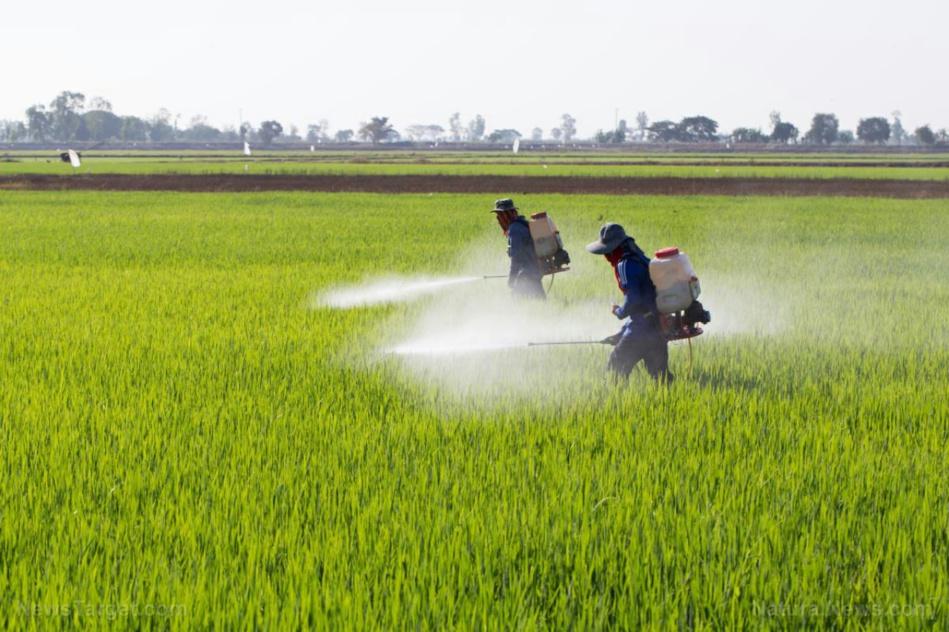 الخراطي: المغرب صار مزبلة للمبيدات الممنوعة بأروبا
