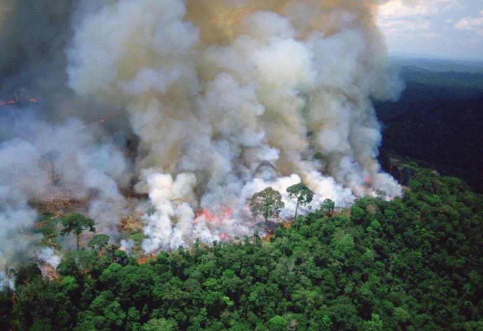 البشر تسببوا بتدهور أو تدمير ثلثي الغابات المطيرة في العالم