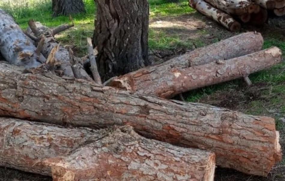 ساكنة أوكايمدن تطالب بمحاسبة المتورطين بقطع أربع شجرات تاريخية