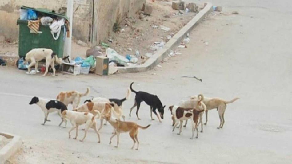 الكلاب الضالة بالحسيمة ترسل 6 اشخاص الى المستسفى