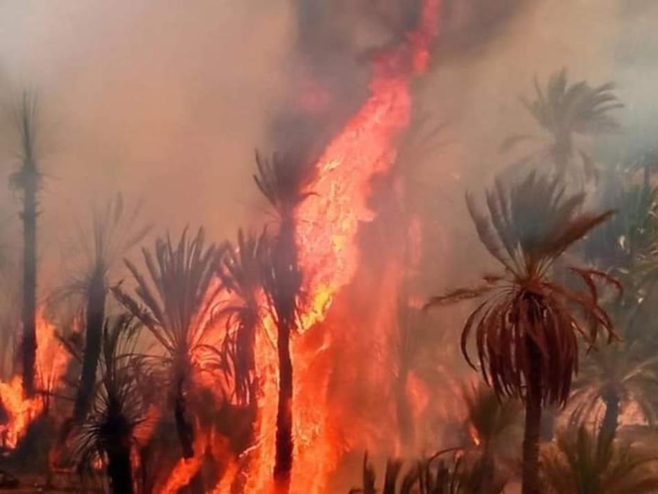بالصور: طائرات القوات المسلحة الملكية تشرع في إخماد حرائق زاكورة