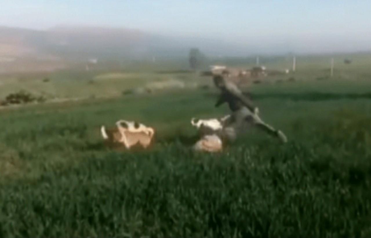 الرماني.. فيديو يوثق إعتداء أحد الأشخاص على سيدة بكلاب متوحشة