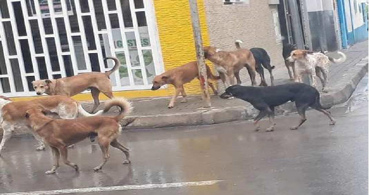 الحسيمة تحت رحمة قطعان الكلاب الضالة