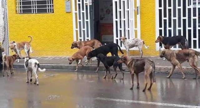 من يحمي ساكنة الحسيمة من خطر الكلاب الضالة؟