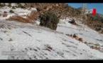 جرادة تلبس بياض الثلج