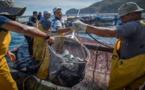 تسجيل انخفاض حاد في كمية مفرغات منتوجات الصيد الساحلي خلال يناير الماضي