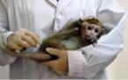 """وفاة أول حالة إصابة بشرية في الصين بـ""""الفيروس القردي B"""""""