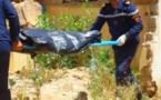 جثة أربعيني تستنفر عناصر الدرك الملكي ببني عبد الله نواحي الحسيمة